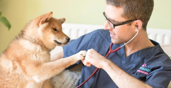 Vet Visits for Puppies: 6 Things New Pet Owners Should Know